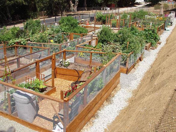 036-garden-plot